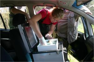 Eggs going into the travelling incubator