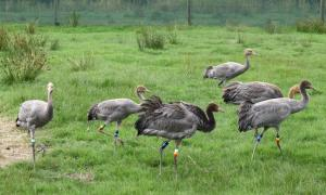 cranes in their new pens