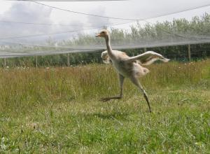 running crane