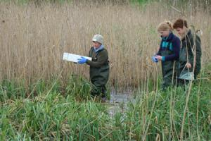 Egg collection in a German Reedbed