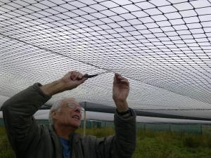 Sewing in the top net