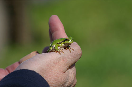 a tree frog sitting on Richards hand