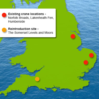 map showing markers of the existing crane locations in Norfolk Broads, Lakenheath Fen and Humberside, and the reintroduction area of the Somerset Levels and Moors