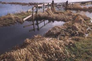 Flooded fields in winter.