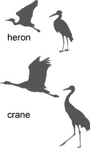 crane and heron identification