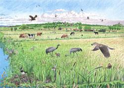 the crane landscape in summer